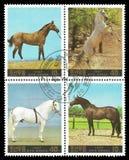 La Corea, cavalli Fotografia Stock