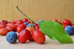La cornaline et les prunelliers se ferment  Image libre de droits