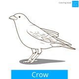 La corneille apprennent le vecteur de livre de coloriage d'oiseaux Images stock