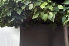 La corona, árboles, se va Imagen de archivo