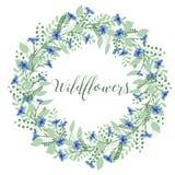 La corona dei fiordalisi fiorisce su un fondo bianco Elemento della decorazione Immagine Stock