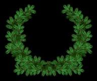 La corona di festa del pino verde si ramifica per il Natale Fotografia Stock