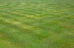 La corona lancia prato inglese dell'erba verde Immagini Stock