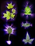 La corrente elettrica ha attraversato cinque tipi differenti di foglie Fotografia Stock