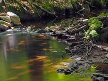 La corrente magica della foresta dell'esposizione lunga con muschio lapida le foglie a dell'erba immagini stock libere da diritti