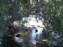 La corriente corre debajo de los árboles Imagen de archivo libre de regalías