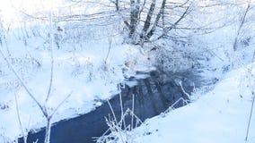 La corriente del bosque en hierba de la nieve del invierno y la naturaleza hermosa de los árboles ajardinan almacen de metraje de vídeo