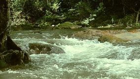 La corriente que fluye en el bosque en la provincia de Nakorn Nayok en Tailandia metrajes