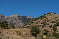 La Corsica, paesaggio selvaggio, Corse Haute, Corse superiore, Francia, Europa, Haut Asco, valle di Asco, alto centro della Corsi Fotografia Stock Libera da Diritti