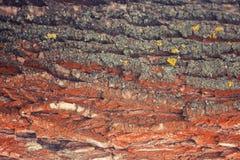 La corteccia dell'albero fotografie stock