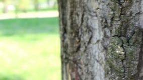 La corteccia dell'albero con fondo verde naturale stock footage