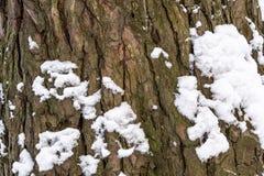 La corteccia dell'albero nel primo piano della neve Fondo Immagine Stock