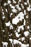 La corteccia dell'albero nel primo piano della neve Fondo Immagini Stock Libere da Diritti