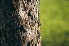 La corteccia dell'albero su un fondo verde L'albero sui precedenti di erba Primo piano della corteccia di albero fotografia stock