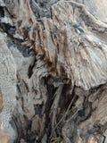 La corteccia di albero ha strutturato il fondo, carta da parati del paesaggio della natura immagini stock