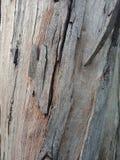 La corteccia di albero ha strutturato il fondo, carta da parati del paesaggio della natura fotografie stock libere da diritti