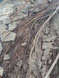 La corteccia di albero ha strutturato il fondo, paesaggio della natura immagini stock