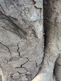 La corteccia di albero ha strutturato il fondo, paesaggio della natura fotografie stock libere da diritti