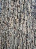 La corteccia di albero ha strutturato il fondo, paesaggio della natura immagini stock libere da diritti
