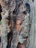 La corteccia di albero ha strutturato il fondo, paesaggio della natura immagine stock