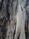 La corteccia di albero ha strutturato il fondo, paesaggio della natura immagine stock libera da diritti