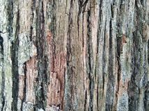 La corteccia di legno immagine stock
