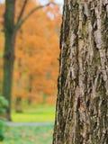 La corteccia di un albero fotografia stock
