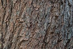 La corteccia di un albero immagine stock
