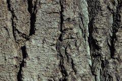 La corteccia di vecchio albero Fotografia Stock Libera da Diritti