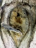 La corteccia di vecchio albero fotografia stock