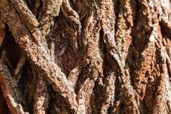 La corteccia di vecchio albero Fondo Fotografie Stock