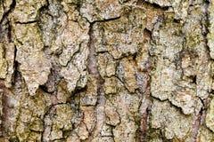 La corteccia di vecchio albero Fondo Fotografia Stock Libera da Diritti