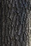 La corteccia di vecchio albero immagini stock libere da diritti