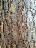 la corteccia sull'albero Fotografia Stock