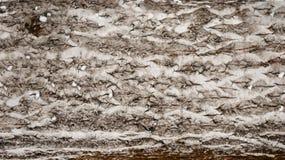La corteza comió cerca, textura y un fondo Foto de archivo