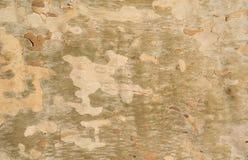 La corteza de árbol del sicómoro Imagenes de archivo