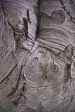 La corteza de árbol habla volúmenes Fotos de archivo