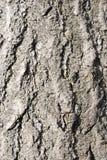 La corteza de árbol textures fondos Fotos de archivo