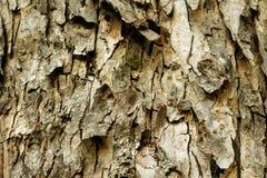 La corteza de árbol vieja Fotografía de archivo