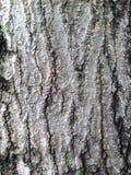 La corteza del árbol Fotografía de archivo
