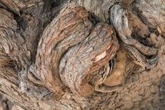 La corteza del árbol Imagenes de archivo