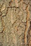 La corteza del árbol Imagen de archivo libre de regalías
