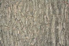 La corteza del árbol Fotografía de archivo libre de regalías