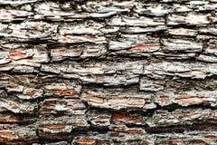 La corteza del árbol viejo Fondo Fotos de archivo libres de regalías