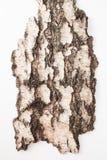 La corteza del abedul viejo en un fondo blanco Lugar para el texto Imagen de archivo