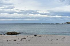 Riazor beach with woman reading a book. Rainy day, La Coruna, Spain. royalty free stock images