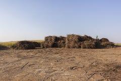 La cosecha de la caña de azúcar lía la yarda Foto de archivo libre de regalías
