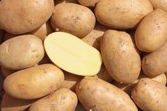 La cosecha de la patata fotos de archivo