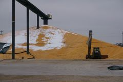 La cosecha de maíz de la caída llena los elevadores Fotografía de archivo