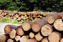La cosecha de la madera en el bosque los registros aserrados miente en el woodpile Calefacción de premisas en el pueblo Tala de á foto de archivo